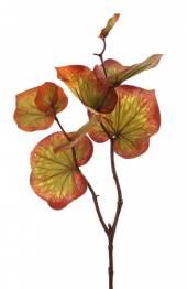 Blätterzweig Asarum 77cm (F185858)