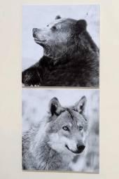 Bild BÄR + WOLF 2er-Set Kunstdruck auf Keilrahmen (456070)