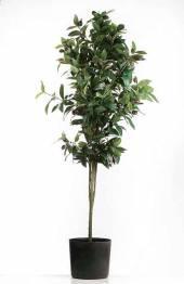Olive Olivenbaum im Topf 135 cm (F187252)