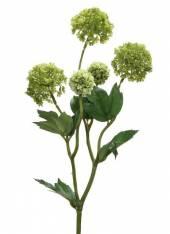 Schneeball Springgreen (F181644)