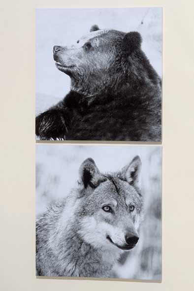 bild b r wolf 2er set kunstdruck auf keilrahmen nur eur. Black Bedroom Furniture Sets. Home Design Ideas