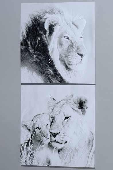 Bild LÖWE Kunstdruck auf Keilrahmen (452660)