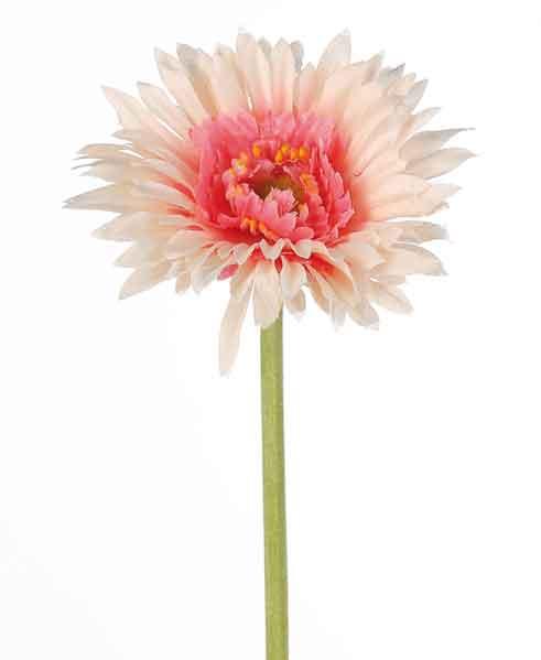 Germini apricot-pink (F181582)