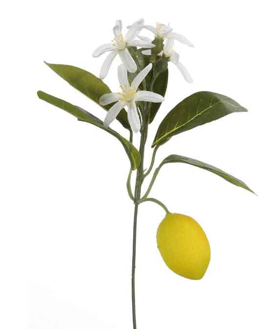 Zitrone Zitronenzweig (F184662)